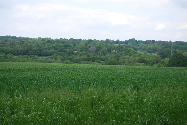 Wheat field near Great Cansiron Farm
