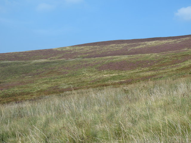 The southern slopes of Brown Fell