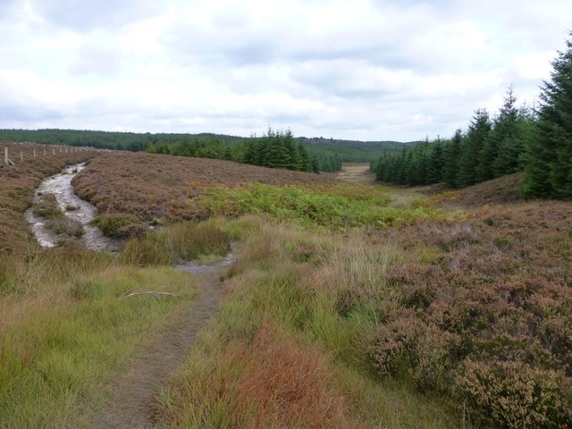 Track from Long Crag