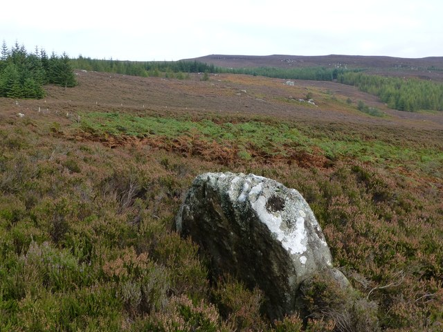Boulder in deep heather and bracken