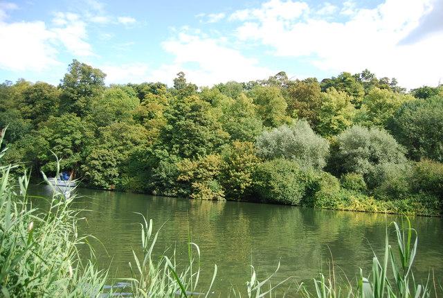 Wooded banks, River Thames