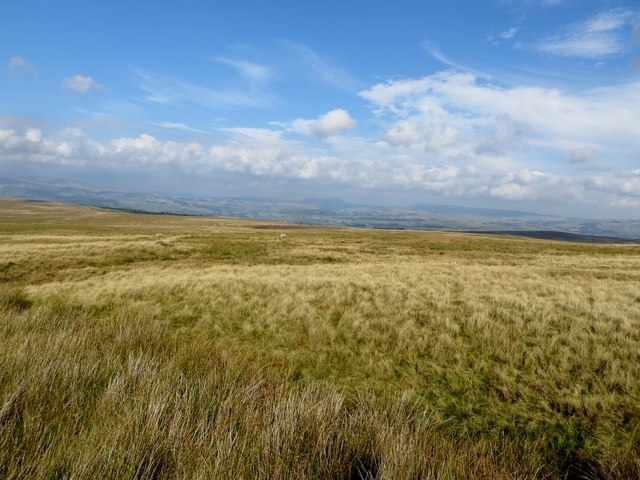 Moorland at Reca Bank Moss