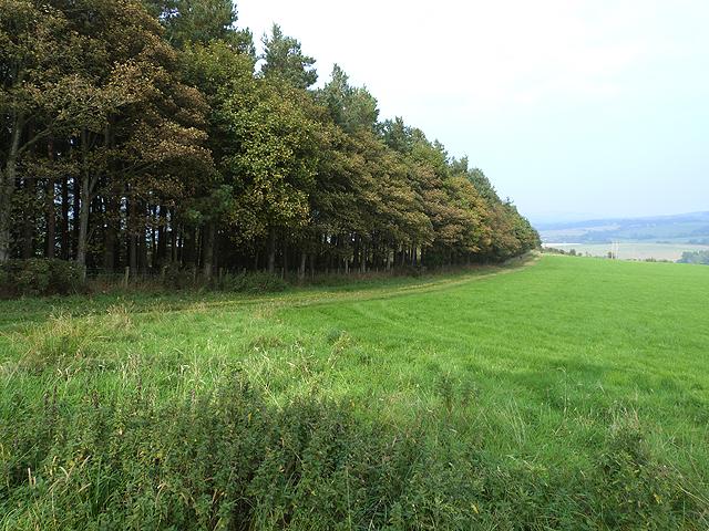 Denholmhill Wood