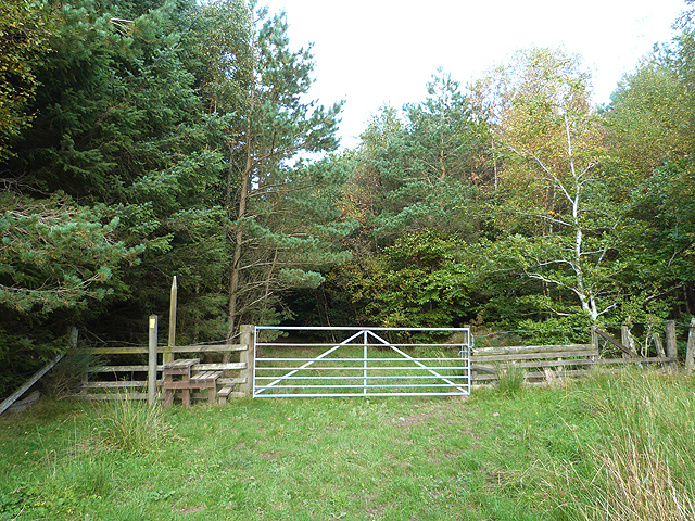 Border Abbeys Way in Dykesglen Wood