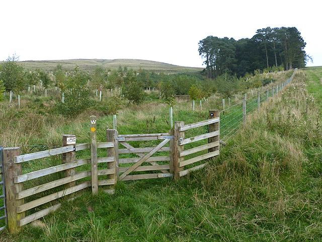 The Border Abbeys Way at Blacklaw Strip