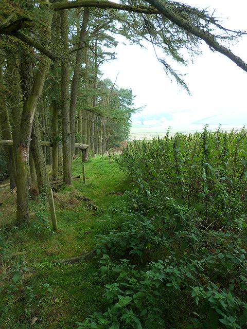 Border Abbeys Way by Blacklaw Strip