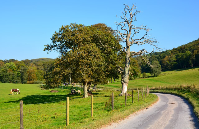 Country Lane, near Creech, Dorset