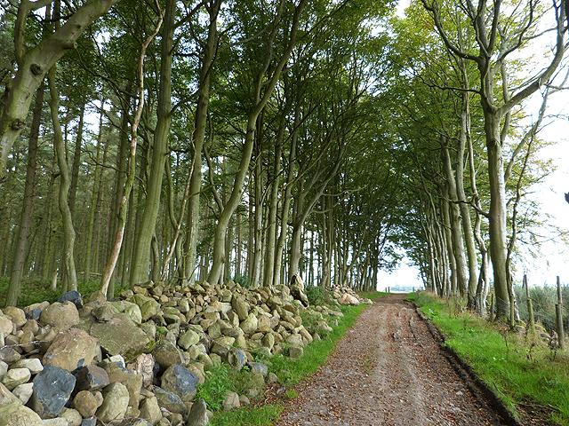 Border Abbeys Way in Todlaw Wells Plantation