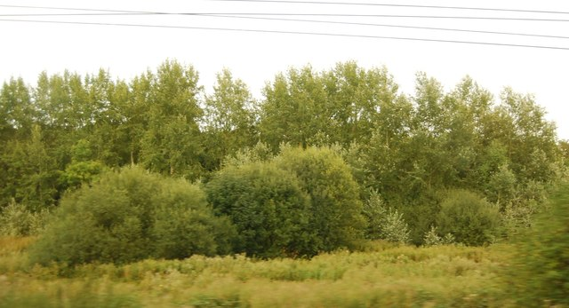 Trees by the East Coast Main Line