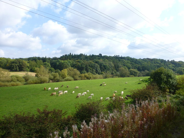 Cattle on banks of the River Severn