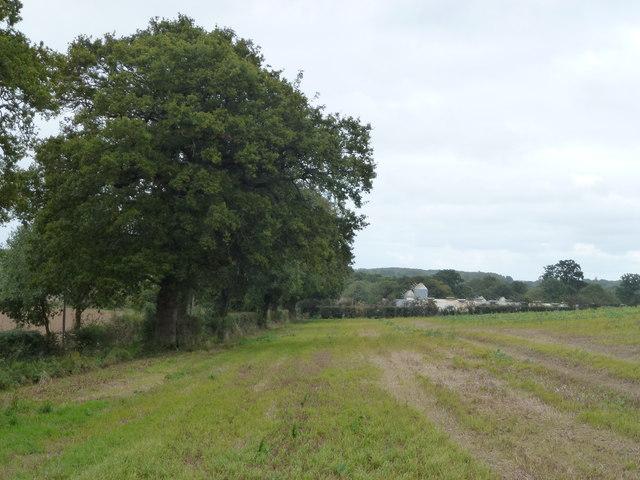 Farmland next to New Road, Itteringham Common