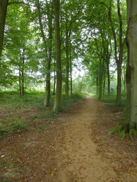Footpath in The Great Wood, Blickling Park