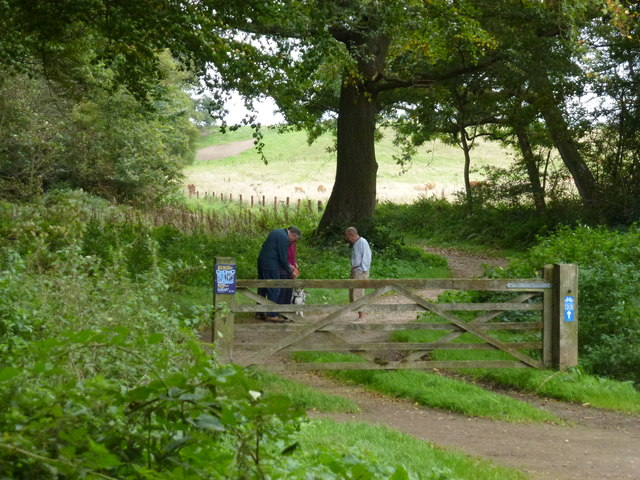 Dog walkers in The Great Wood, Blickling Park