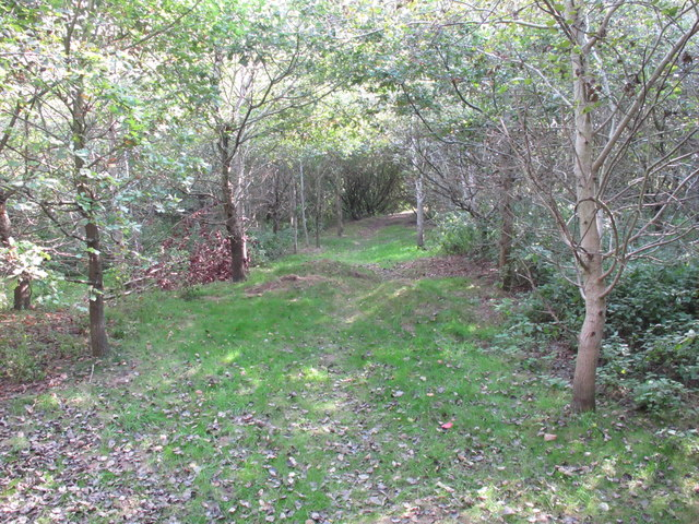 Path in Ham Wood, Thame