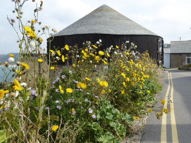 Wild flowers by the roadside in Sennen Cove