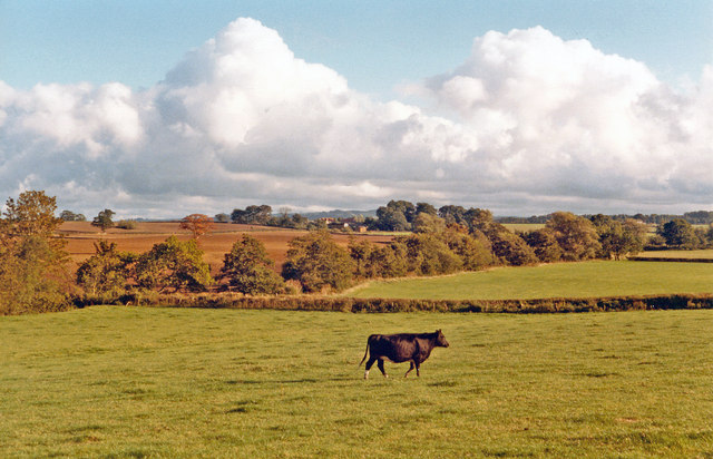 Pastural scene on A356 near Merriott and  West Chinnock, 1984