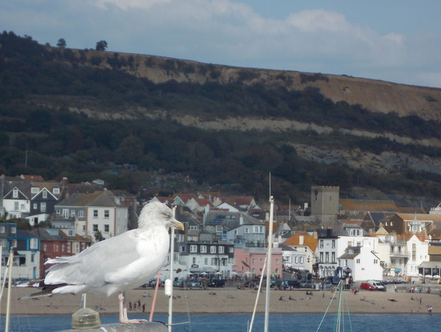 Lyme Regis: seagull on a lamppost
