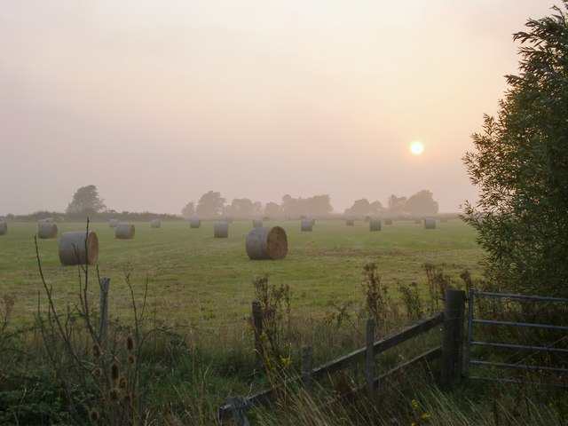 A misty September evening, Halstow Marshes (3)