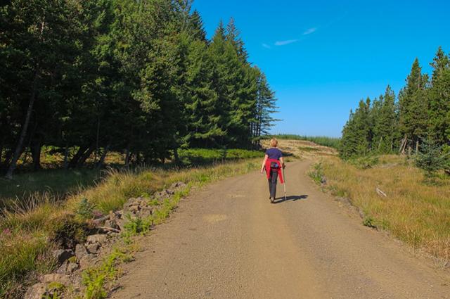 Forest Track Glen Gorm