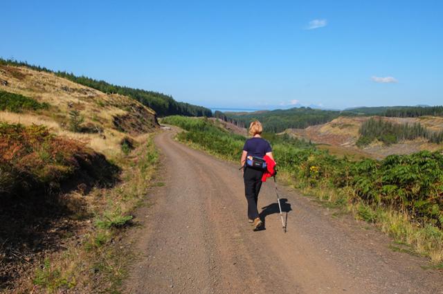 Forest Track above Glen Gorm
