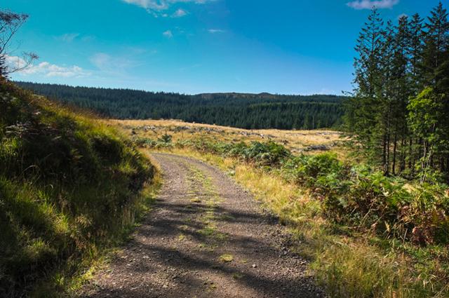 Forest Track in Glen Gorm