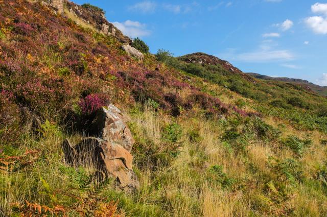 Hillside under Cnoc Ruaridh
