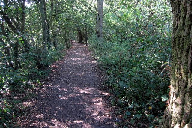 Path through Putnoe Wood