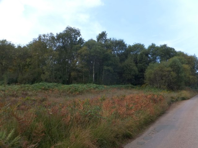 Woodland on East Budleigh Common