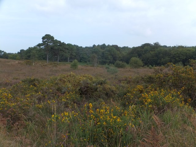 East Budleigh Common