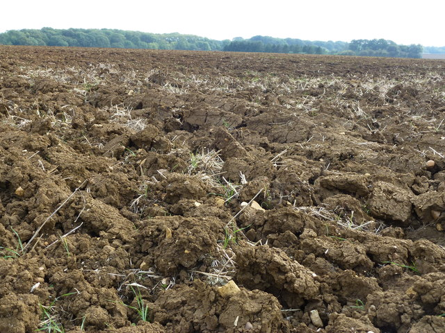 Recently ploughed field near Castor Hanglands Nature Reserve