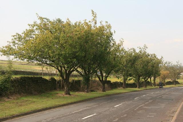 Hollin Busk Lane