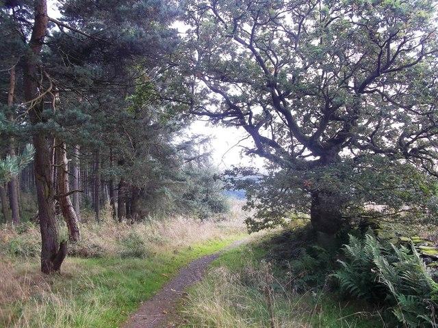 Mixed Woodland near Flouch