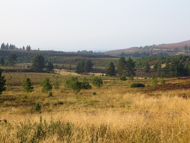 Moorland turning to forest