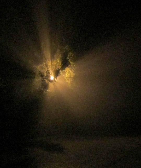 Light in the fog, Doddiscombsleigh