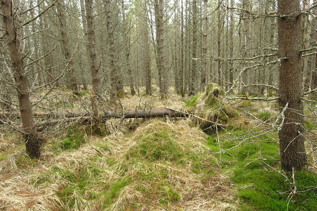 Forgotten woodland to the SE of Beinn nan Sparra