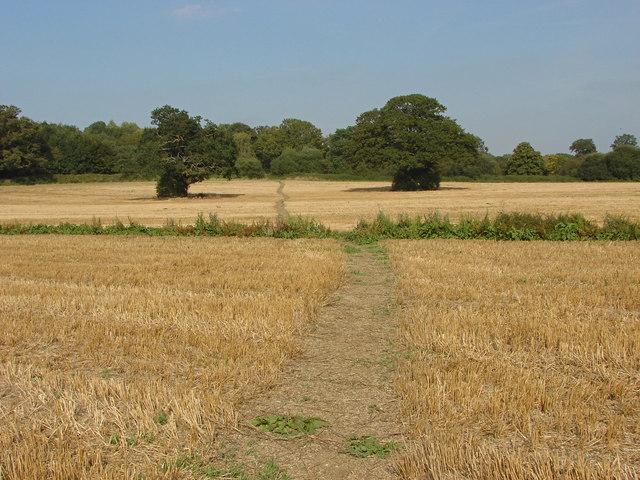 Stubble field, Loseley Park