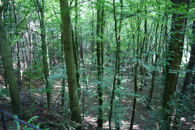 Woodland on Oak Hill