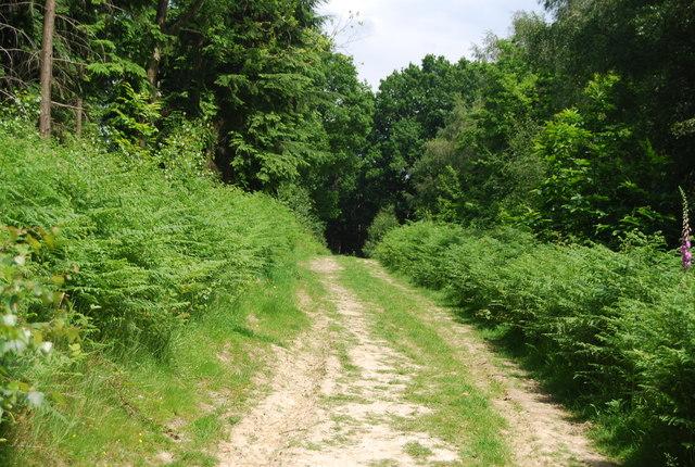Footpath, Park Plantation