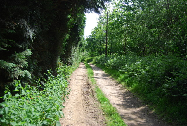Track in Park Plantation