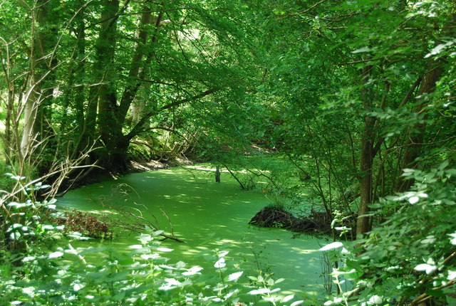 A green scummy pond