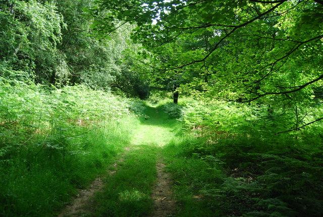 Footpath, Rookery Wood
