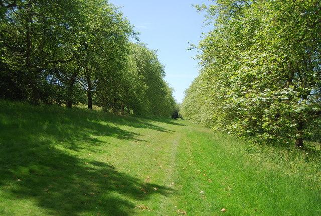 Footpath, Ingleby Toll