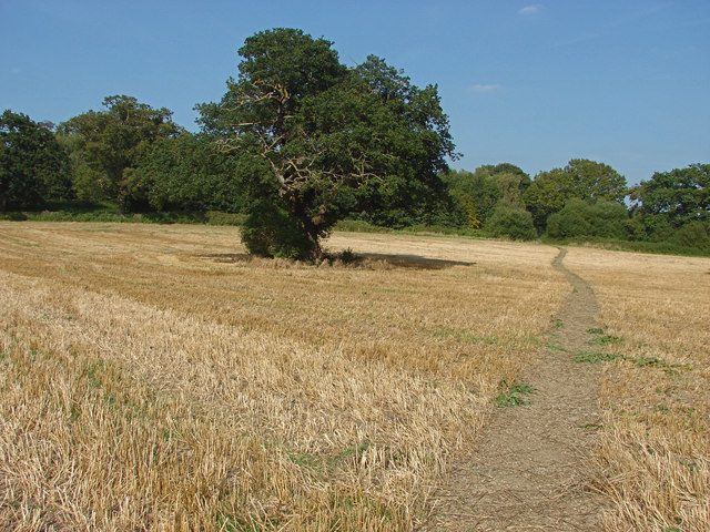 Freestanding oak, Loseley Park