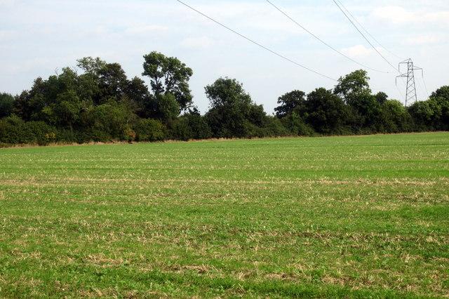 Pylon by High Farm