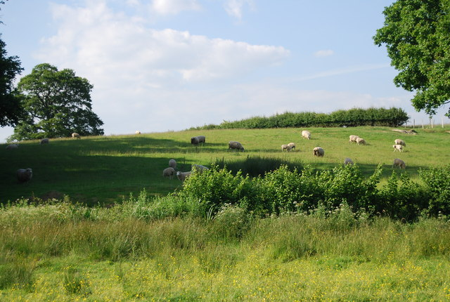 Sheep grazing on a hillside