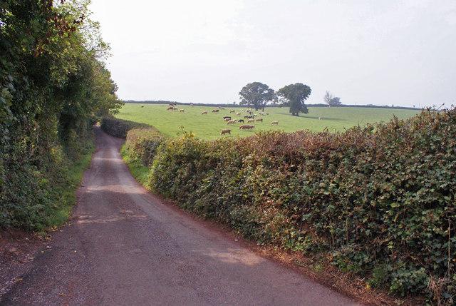 Cockington Road