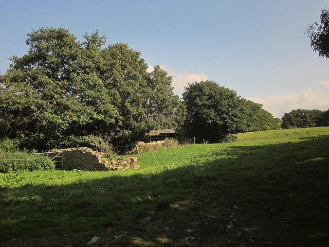 Field at Kilve