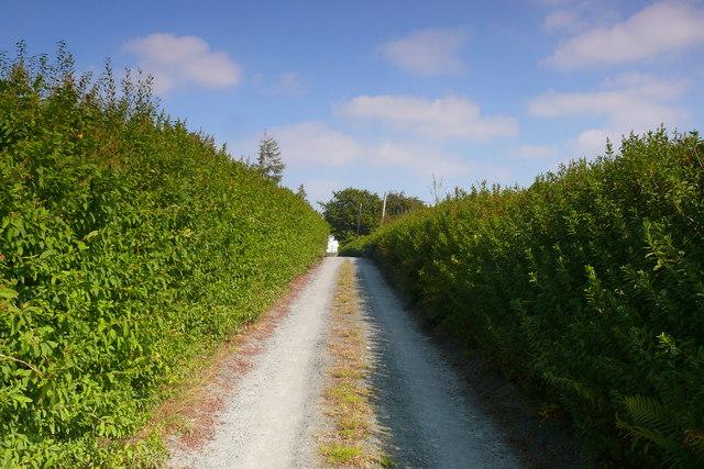 Lon i Fryn Newydd a Thy'n-y-pant / Lane to Bryn Newydd and Ty'n-y-pant