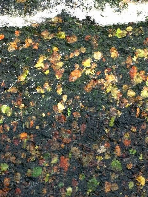 Early autumn at Leadmill Bridge