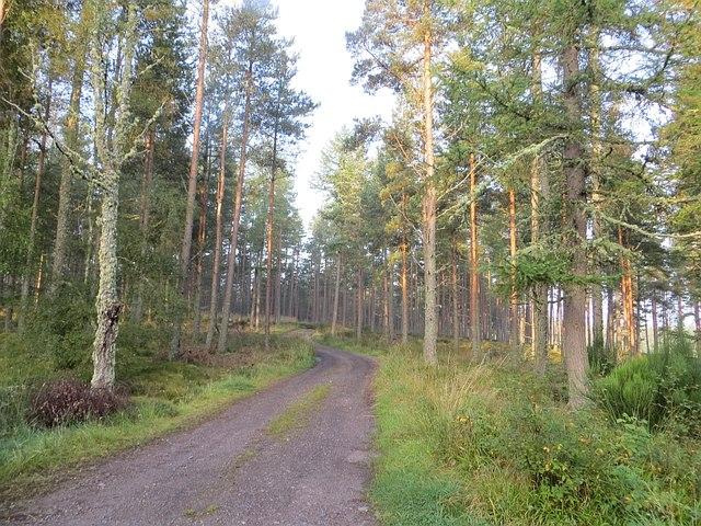 Bantrach Wood